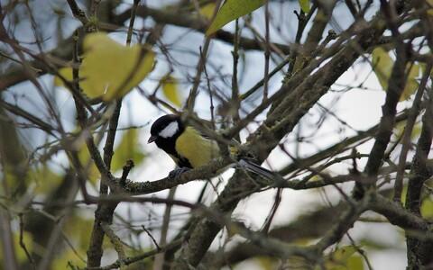 Linnud nopivad tarkuseterakesi ka üksteise käitumist vaadeldes, ka videosalvestise pealt ja isegi üle liigipiiride.