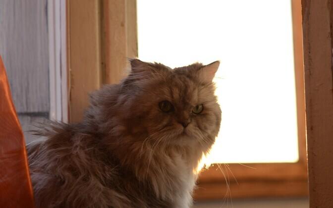 коронавирус кошек в питомнике