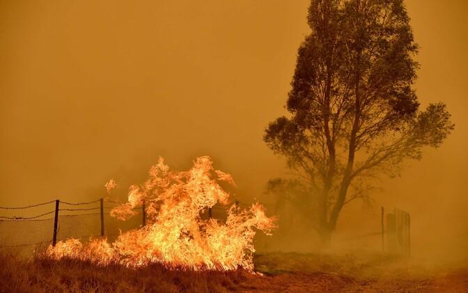 Üleüldiselt oli 2019. aasta Austraalia viimase sajandi kõige kuumem. S