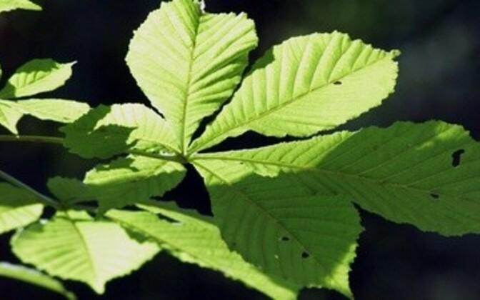 Üldine õhutemperatuuri tõus kahjustab taimede fotosünteesi.
