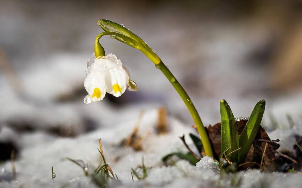 Весна подкрадывается.