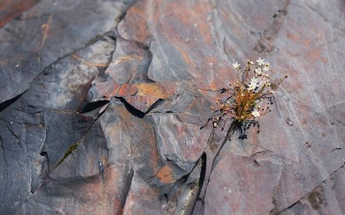 Šungiidid, Loode-Venemaalt Karjalast pärit kuulsad settekivimid, räägivad loo varase Maa hapnikurikkast atmosfäärist.