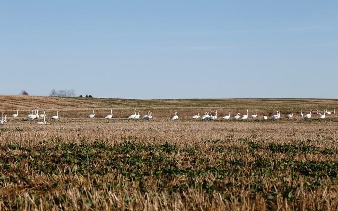 Field in springtime.