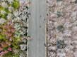Kirsiõied Hiinas Zhengzhous
