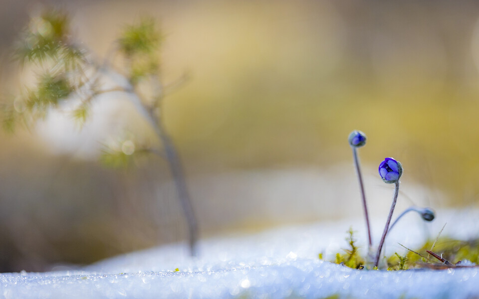 Kevadine loodus