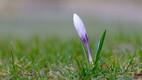 Kevad Eestis