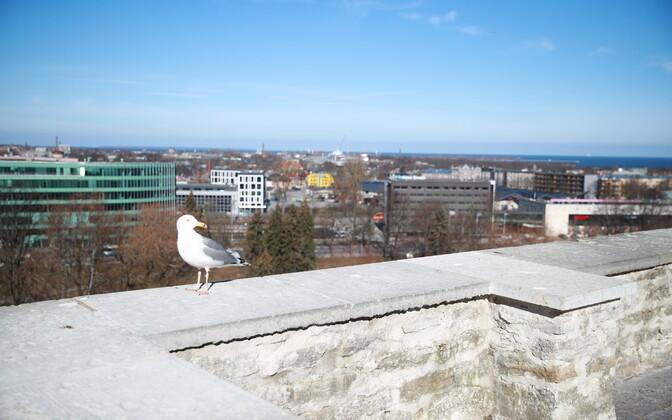 Закрывать Таллинн пока не будут.