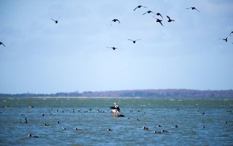 Эстонские ученые изучают так называемую мертвую зону в Балтийском море. Иллюстративная фотография.