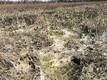 Неожиданно появившийся ведьмин колодец. Затопленное поле.