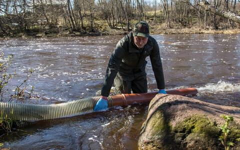 В реку Пуртсе выпустили мальков лосося.
