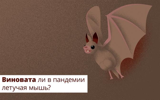Виновата ли в пандемии летучая мышь?