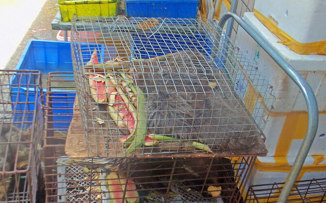 Live rodents caged at a wet market in Shenzhen, China.