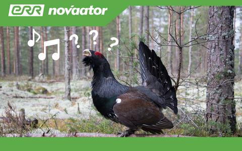Eestis on kohatud enam kui 390 liiki linde, neist umbes 200 saab pidada siinmail regulaarseks pesitsejaks.