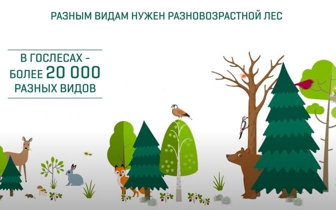 Разные виды нуждаются в лесах разного возраста.
