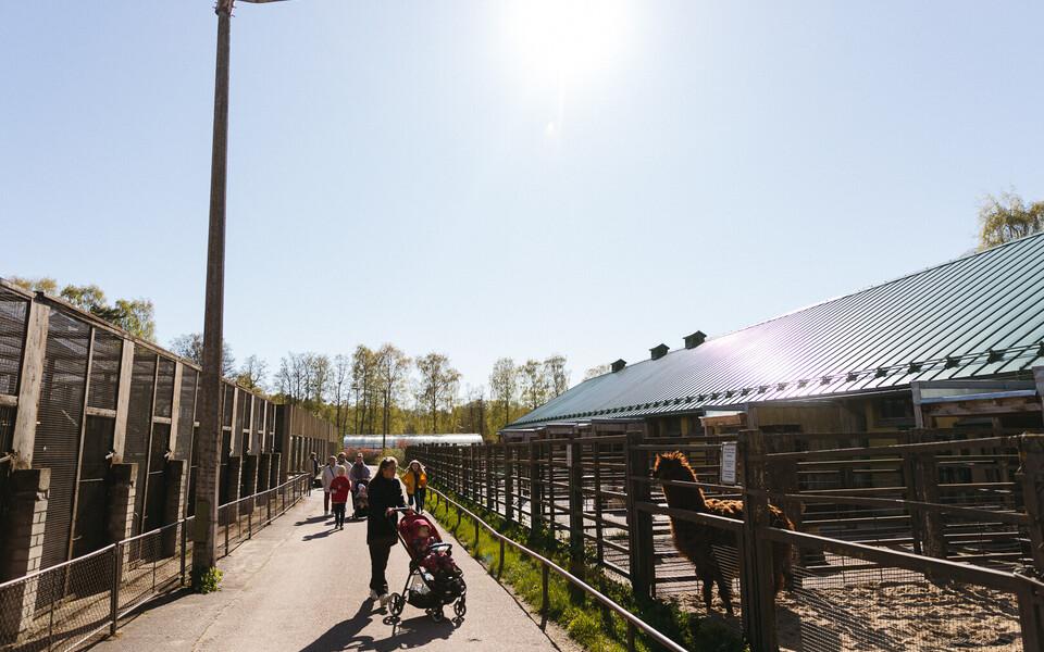 Loomaaed on taas avatud