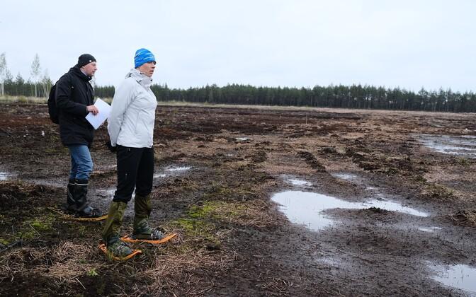 President Kaljulaid at Tudu bog in Lääne-Viru County on Thursday.