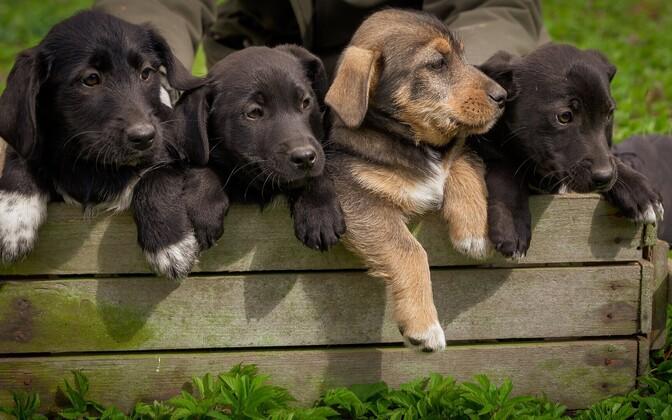 Весной у людей возрастает интерес к домашним питомцам, но осенью некоторые новые собаководы могут