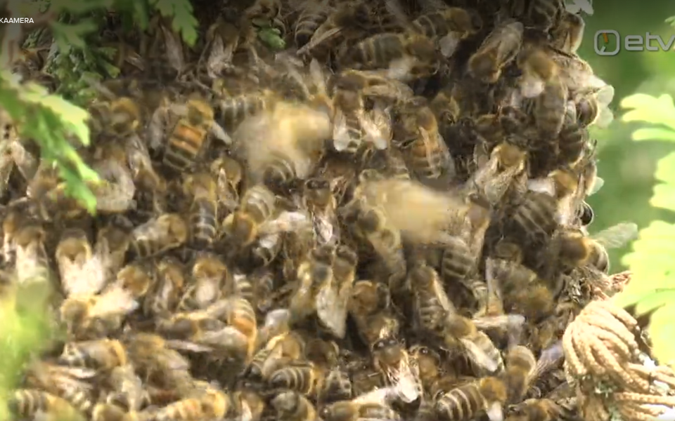 Mesilassülem.