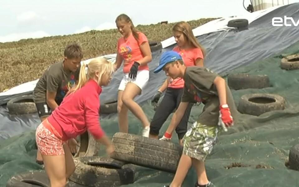 Таллиннские школьники разобрали все места в трудовых ученических дружинах.