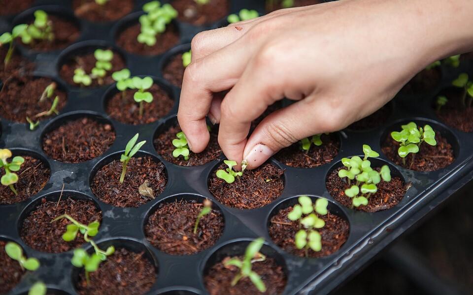 Maailma seemnete mitmekesisus on viimase sajandi jooksul kordades kahanenud.