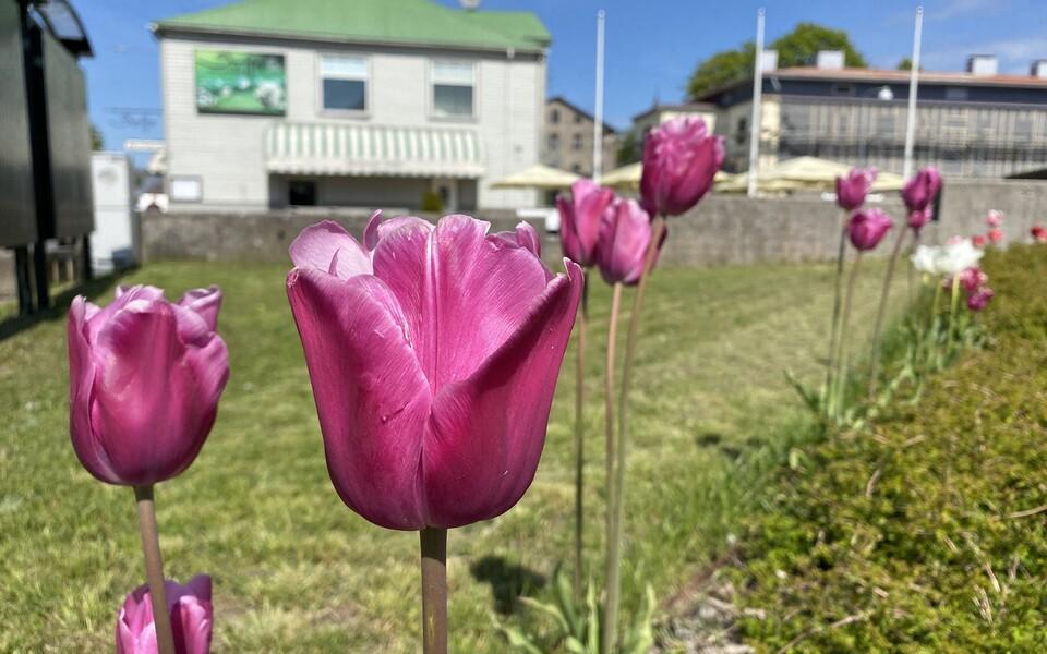 Весна в Хаапсалу.