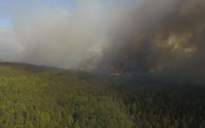 Forest fire in Klooga Bog.