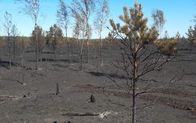 Klooga bog fire aftermath