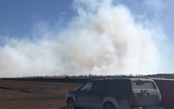 Пожар на болоте Майма.