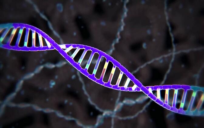 DNA-analüüs võib anda väärtuslikku infot nii toidu koostise, päritolu, ohutuse kui ka tervislikkuse kohta.