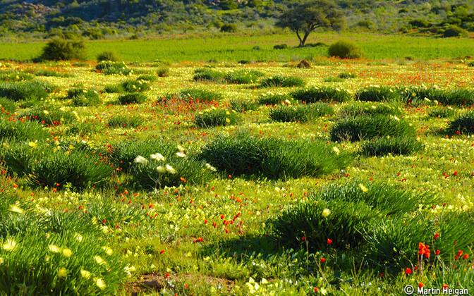 Puutumata loodusmaastikud on olulised, sest need puhastavad õhku ja vett