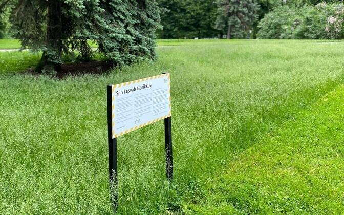 """Projekt """"Kureeritud elurikkus"""" püüab muuta linna paremaks ajaveetmise kohaks ja tuua parkidesse nii rohkem tegevusi kui ka loodust."""