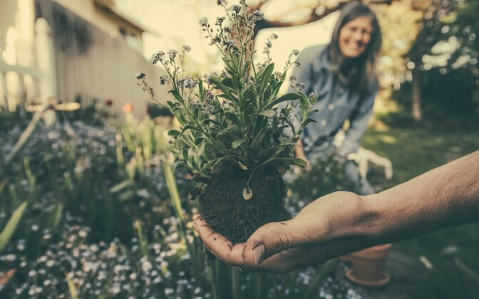 Огород. Иллюстративное фото