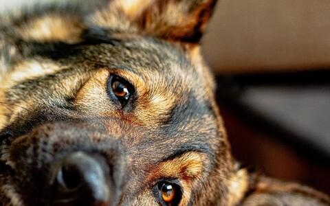 Baltisaksa naised võitlesid juba sajand tagasi selle eest, et koertega ei tehtaks julmi katseid.