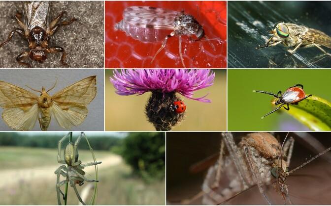 Эстоноземельцам приходится терпеть укусы самых разных представителей мира животного мира.