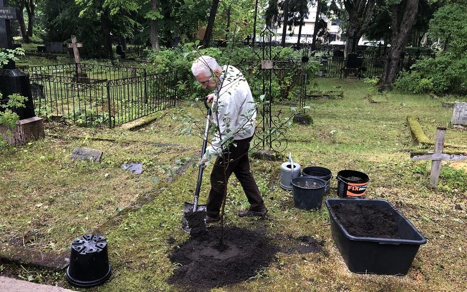 Ernst Enno hauale istutati kirsipuu