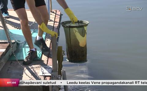 Tallinn katsetab sadamas mereprügi püüdjat