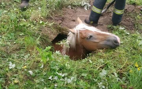 Лошадь провалилась в яму.