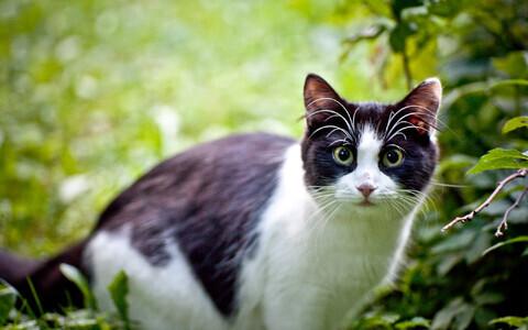 Analüüs näitas, et leitud kassi elu ajal kandsid inimesed tema eest hoolt.