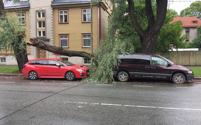 Поваленное дерево на улице Ристику в Таллинне.