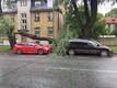 Tallinnas Ristiku tänaval murdunud puu. Inimesed õnneks kannatada ei saanud