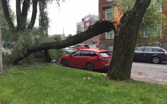 Storm damage on Ristiku street in Tallinn.