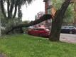 Поваленное дерево на улице Ристику в Таллинне.Madis Sein/ERR