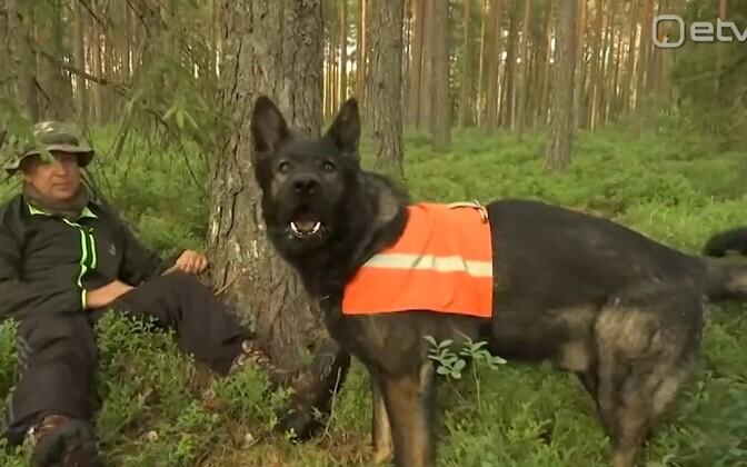 Добровольцы обучают своих животных искать людей.