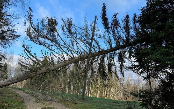 A fallen tree on a powerline.