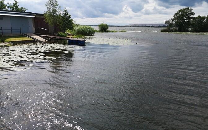 Вход в порт Кулгу зарос водорослями.