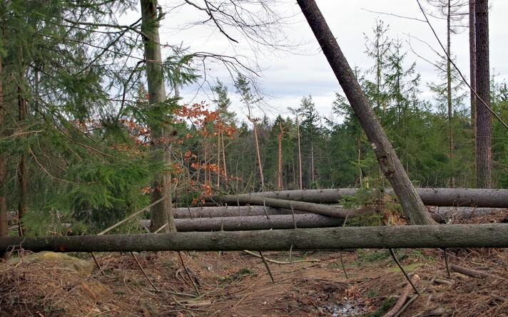 Лес. Иллюстративная фотография.