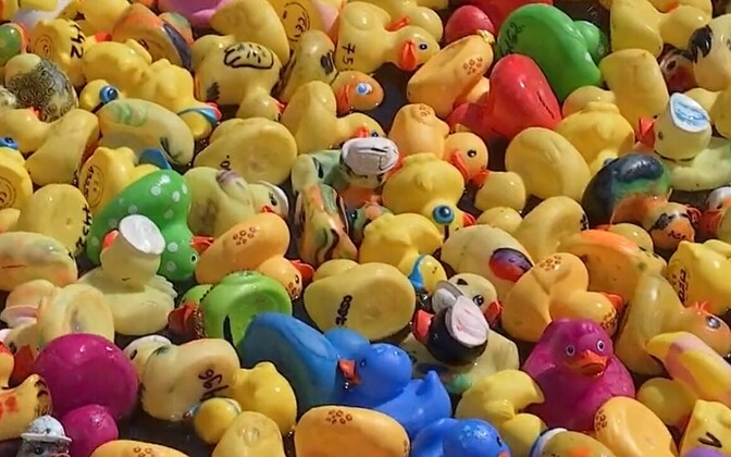 Just a few of the rubber ducks getting ready for Sunday's charity race.