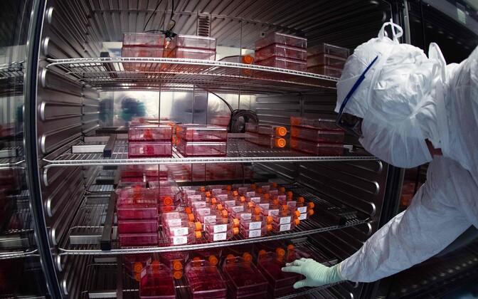 Vaktsiini testimine Sanofi laboris.