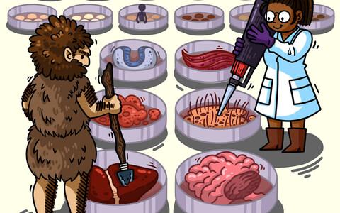 Tüvirakkudest saab kasvatada mitmeid erinevaid organoide ja uurida seejärel, millist rolli mängib nende arengu juures neandertallaste DNA.