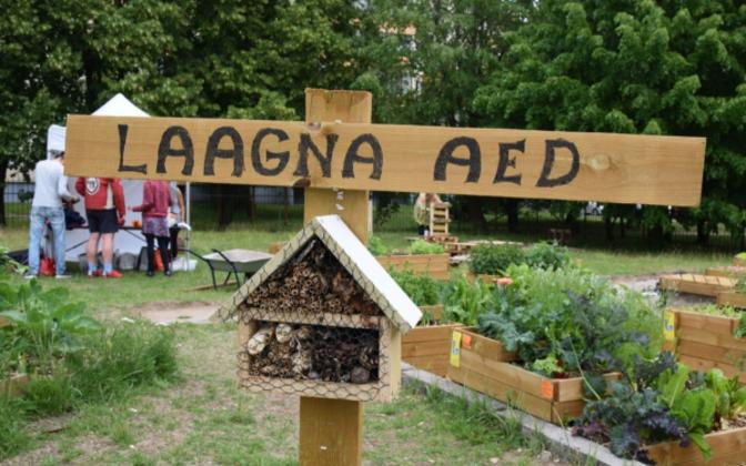 Одно из мероприятий фестиваля пройдет в Ласнамяэ - в общинном огороде Лаагна.